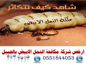 ارخص شركة مكافحة النمل الابيض بالجبيل