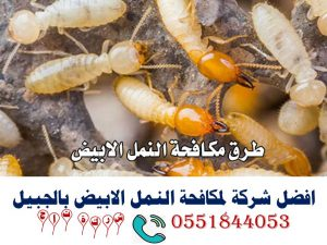 افضل شركة لمكافحة النمل الابيض بالجبيل