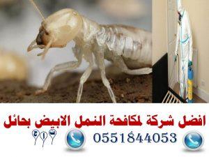 افضل شركة لمكافحة النمل الابيض بحائل