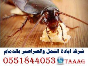 شركة ابادة النمل والصراصير بالدمام