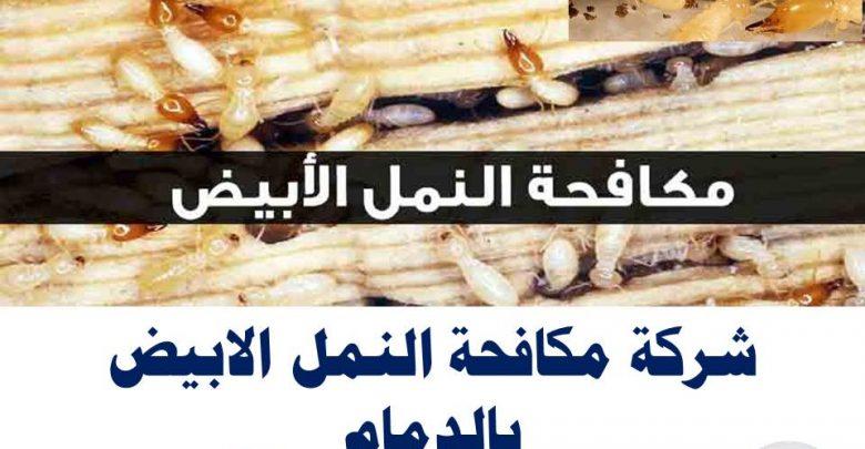 شركة مكافحة النمل الابيض بالدمام 2