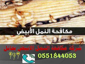 شركة مكافحة النمل الابيض بحائل
