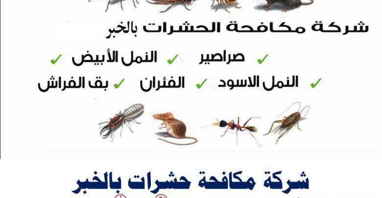 شركة مكافحة حشرات بالخبر0551844053