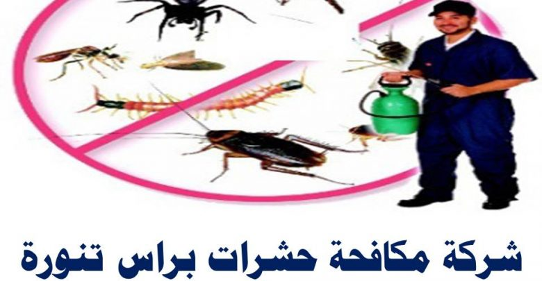 شركة مكافحة حشرات براس تنوره
