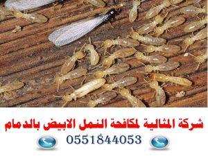 شركة المثالية لمكافحة النمل الابيض بالدمام0551844053