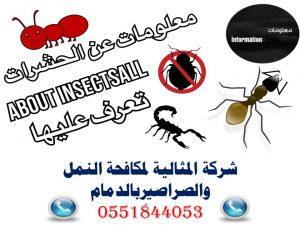 شركة المثالية لمكافحة النمل والصراصيربالدمام