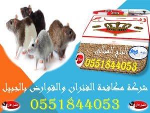 شركة مكافحة الفئران والقوارض بالجبيل