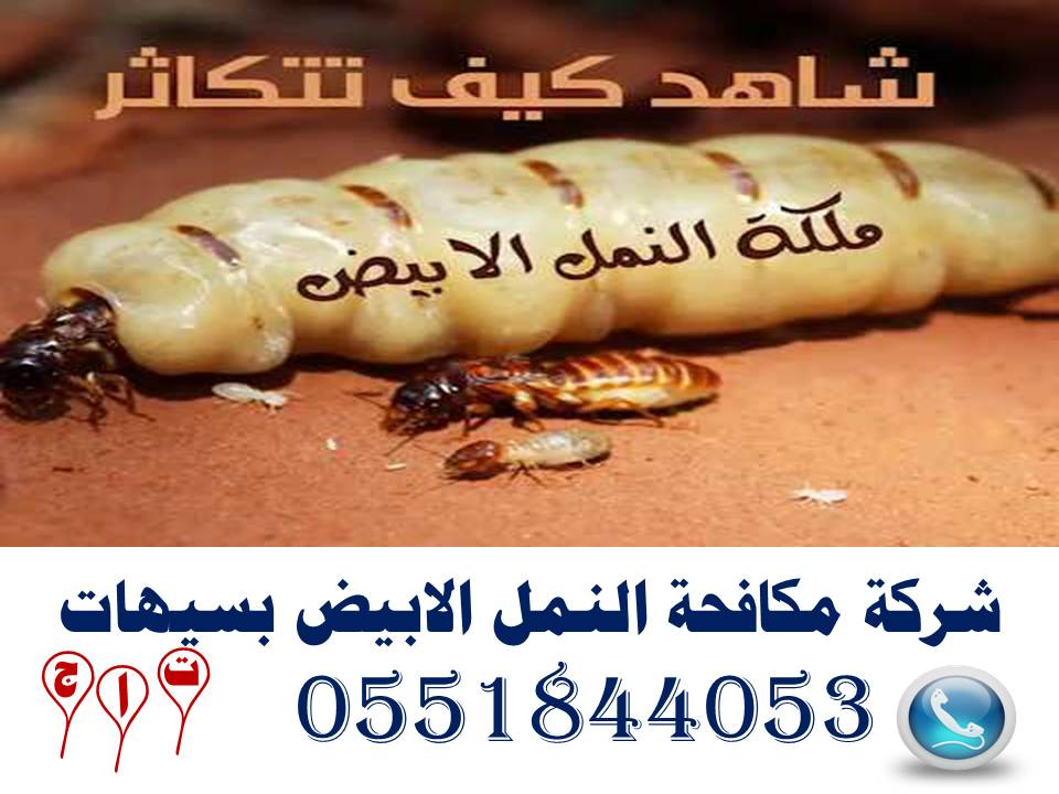 شركة مكافحة النمل الابيض بسيهات